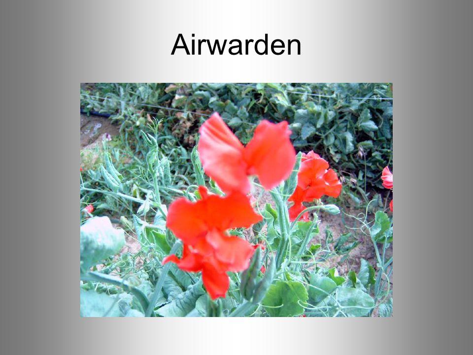 Airwarden