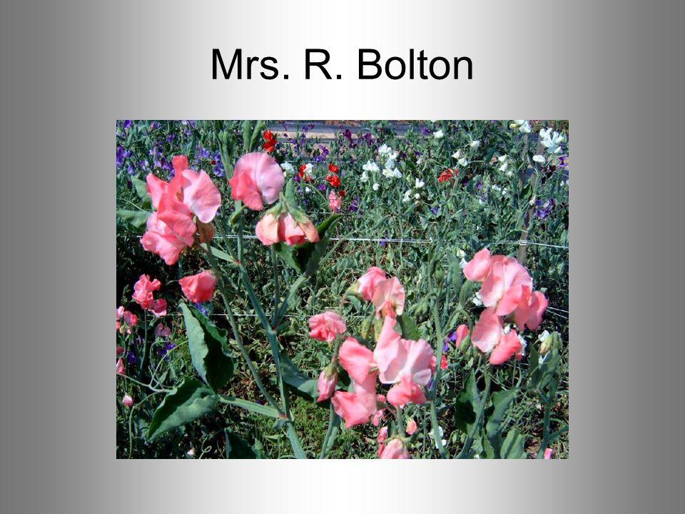 Mrs. R. Bolton