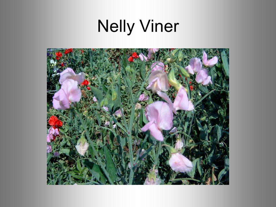 Nelly Viner