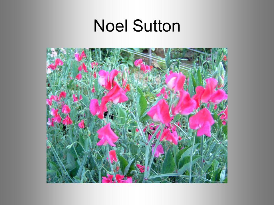 Noel Sutton