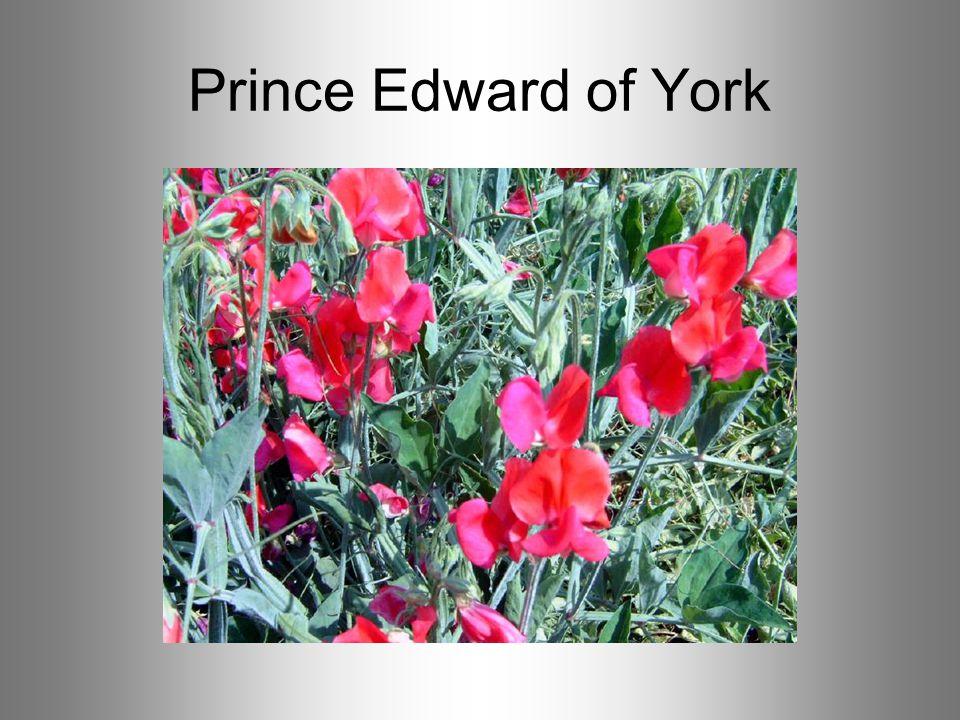 Prince Edward of York