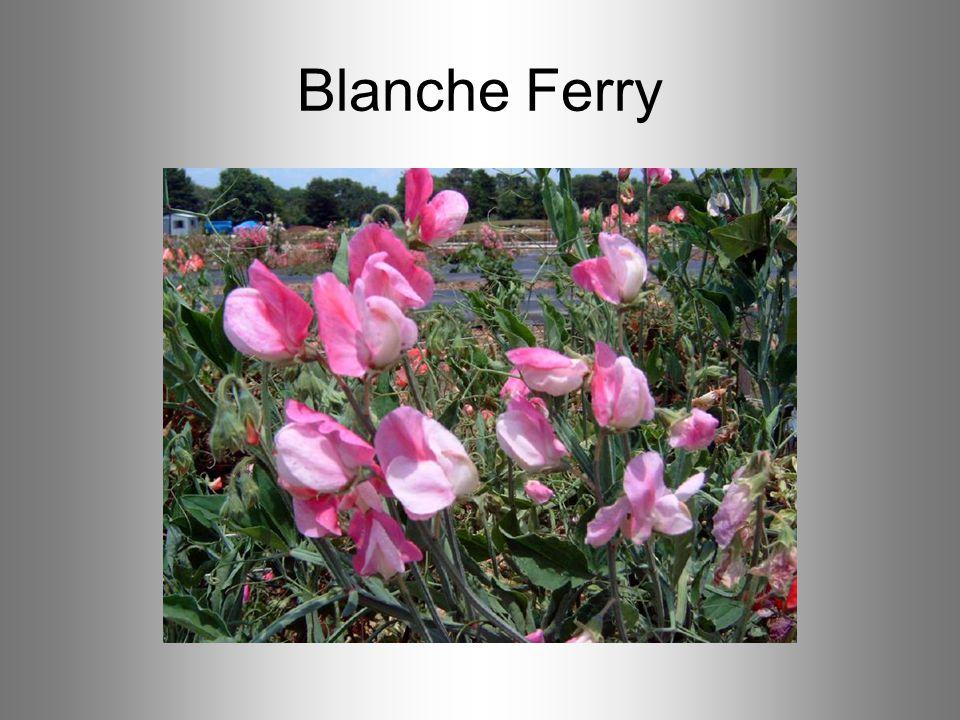 Blanche Ferry