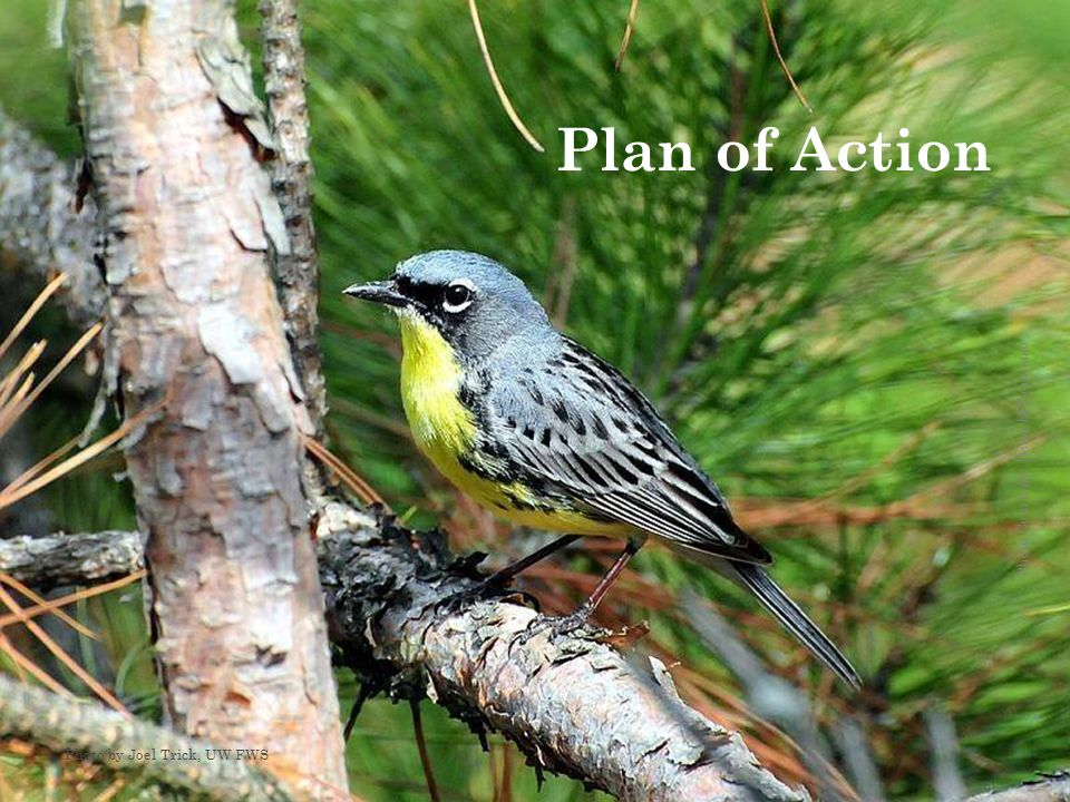Photo Courtesy: Dean DiTommaso Plan of Action Photo by Joel Trick, UW FWS