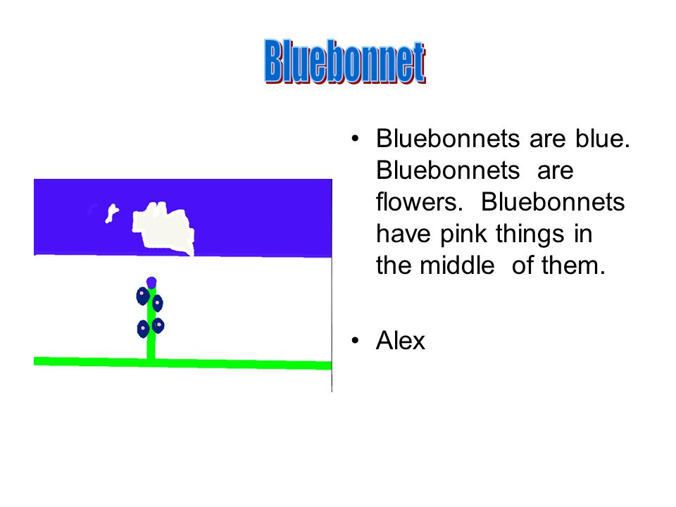 Bluebonnets are blue. Bluebonnets are flowers. Bluebonnets have pink things in the middle of them.