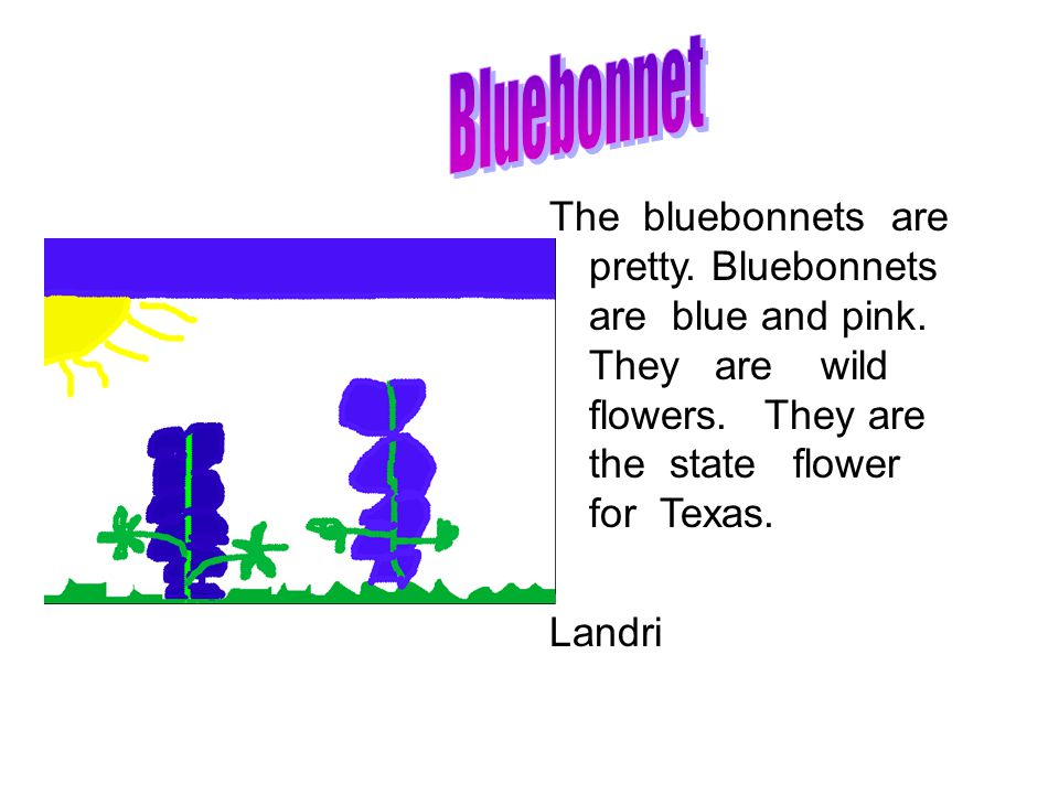 The bluebonnets are pretty. Bluebonnets are blue and pink.
