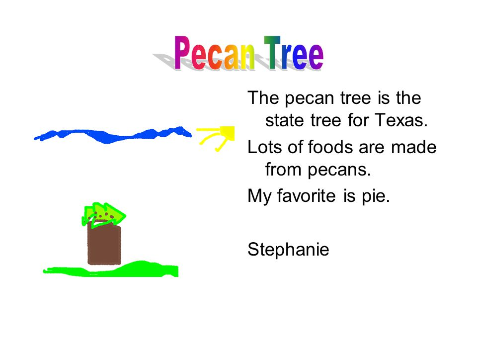 The pecan tree is the state tree for Texas. Lots of foods are made from pecans.