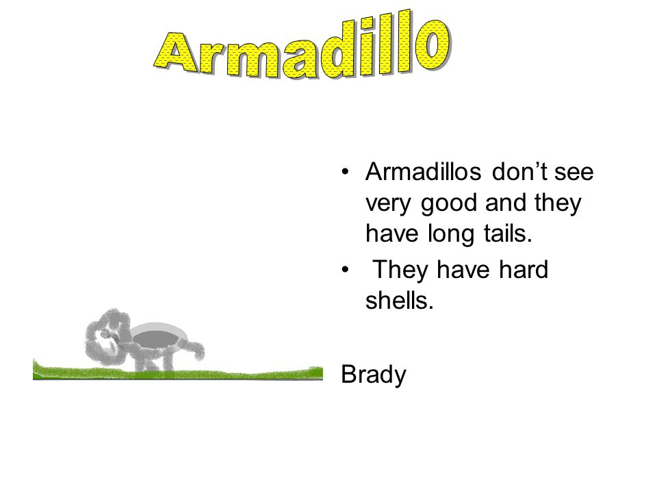 Armadillos don't see very good and they have long tails. They have hard shells. Brady