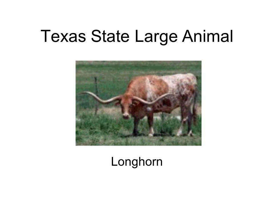 Texas State Large Animal Longhorn