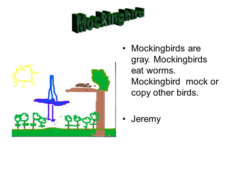 Mockingbirds are gray. Mockingbirds eat worms. Mockingbird mock or copy other birds. Jeremy