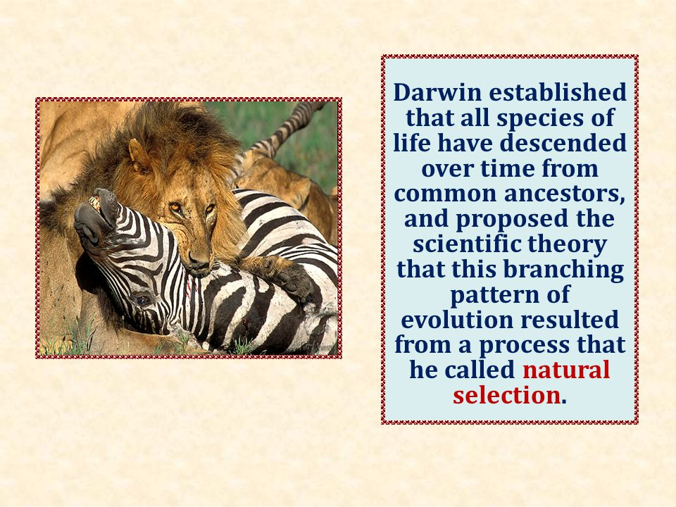 He published his theory with compelling evidence for evolution in his 1859 book On the Origin of Species.