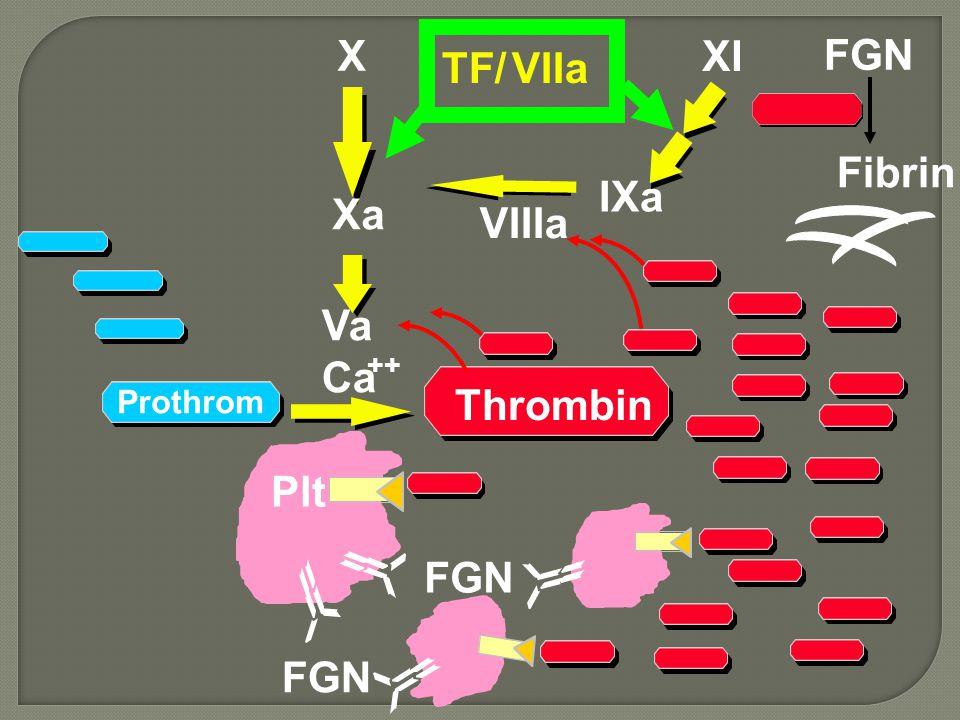 X TF/ VIIa Va Ca ++ FGN IXa XI VIIIa FGN Fibrin Xa Plt Prothrom Thrombin