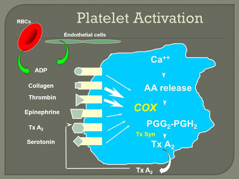 ADP Collagen Thrombin Epinephrine Tx A 2 Serotonin  Ca ++ PGG 2 -PGH 2 AA release Tx A 2 COX Tx Syn Tx A 2 RBCs Endothelial cells