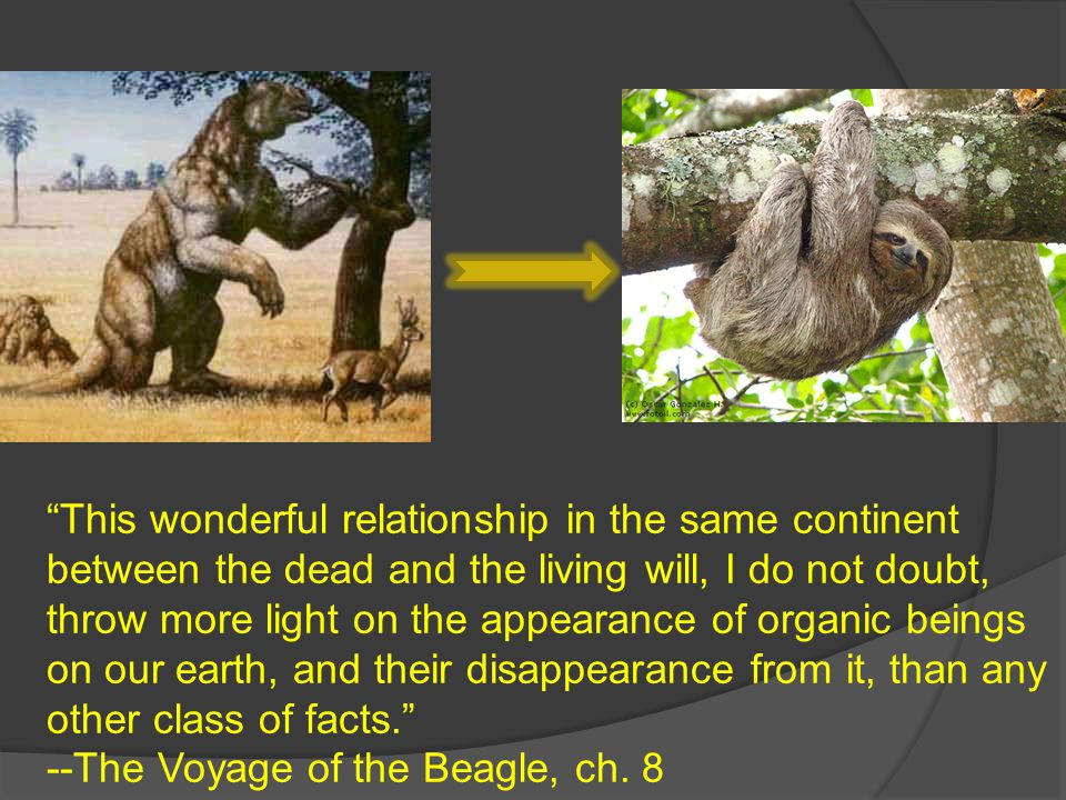 """""""This wonderful relationship in the same continent between the dead and the living will, I do not doubt, throw more light on the appearance of organic"""