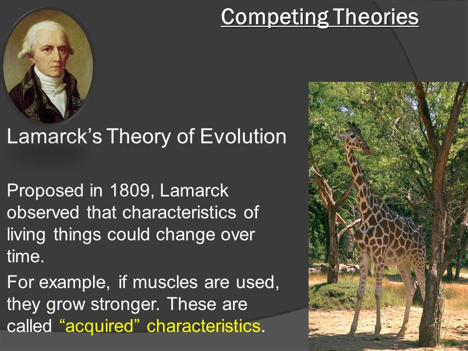 Competing Theories Lamarck's Theory of Evolution Proposed in 1809, Lamarck observed that characteristics of living things could change over time. For
