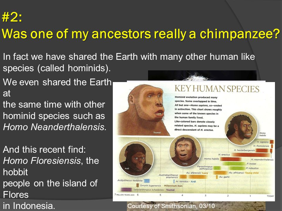 #2: Was one of my ancestors really a chimpanzee? We even shared the Earth at the same time with other hominid species such as Homo Neanderthalensis. A
