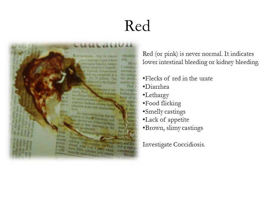 Red Red (or pink) is never normal. It indicates lower intestinal bleeding or kidney bleeding.