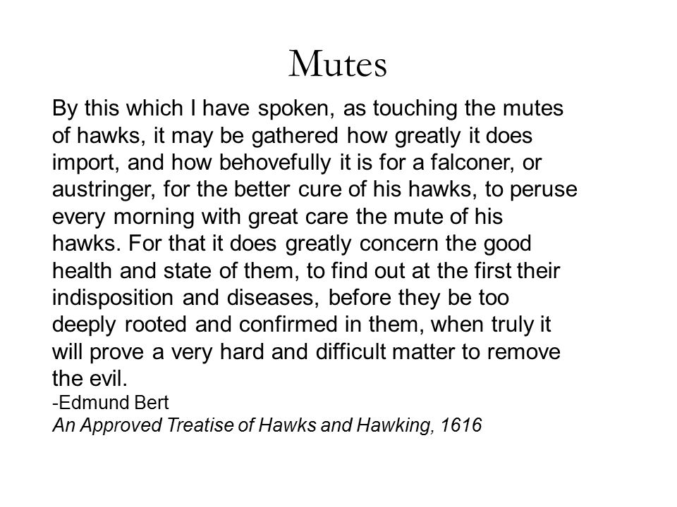 Mutes By this which I have spoken, as touching the mutes of hawks, it may be gathered how greatly it does import, and how behovefully it is for a falconer, or austringer, for the better cure of his hawks, to peruse every morning with great care the mute of his hawks.