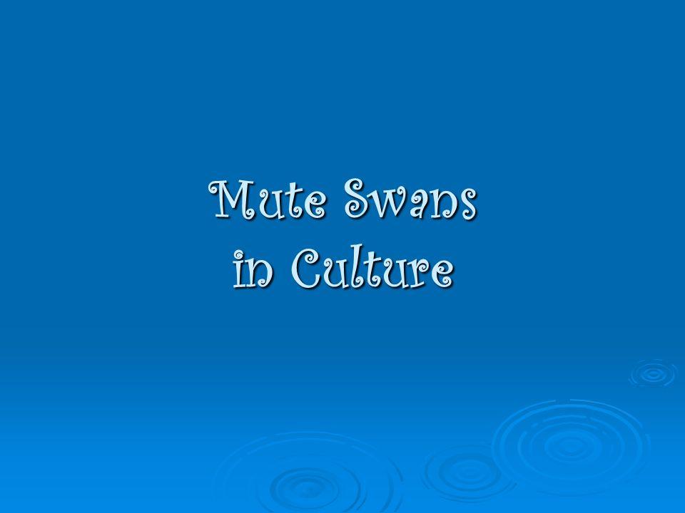 Mute Swans in Culture