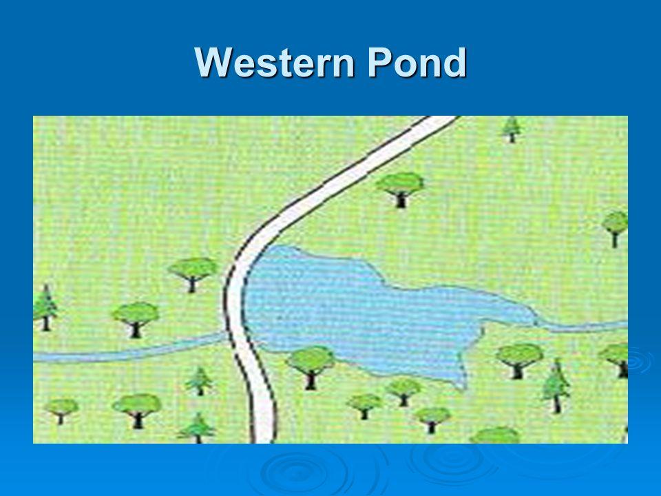 Western Pond