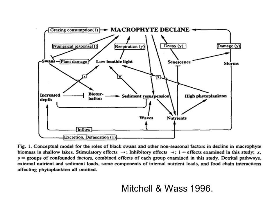 Mitchell & Wass 1996.