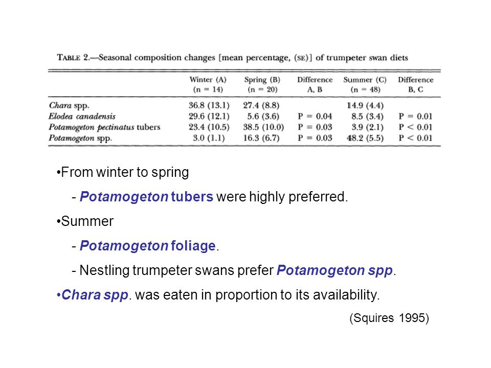 From winter to spring - Potamogeton tubers were highly preferred.