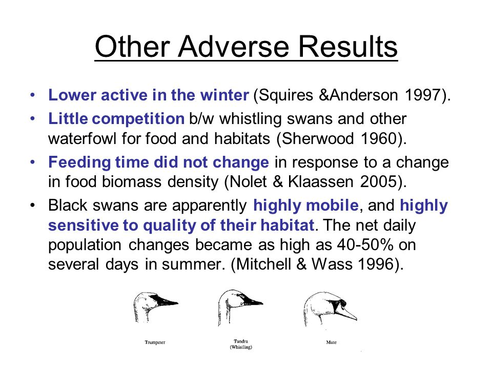 Other Adverse Results Lower active in the winter (Squires &Anderson 1997).