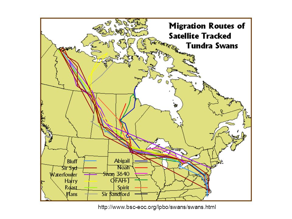Migratory Bird Treaty Act Implemented treaties with Great Britain for Canada ratified in 1919, and Mexico 1936.