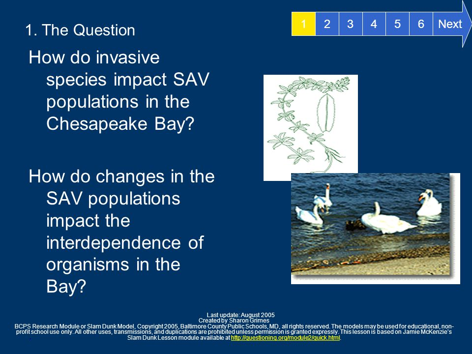 1. The Question How do invasive species impact SAV populations in the Chesapeake Bay.
