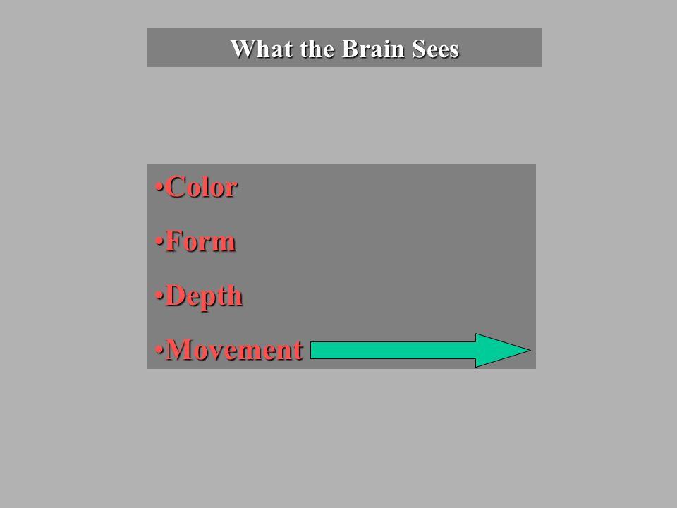 What the Brain Sees ColorColor FormForm DepthDepth MovementMovement
