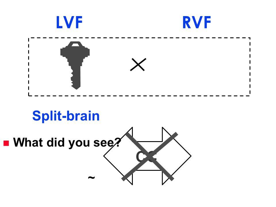 CC Split-brain LVF RVF n What did you see? ~
