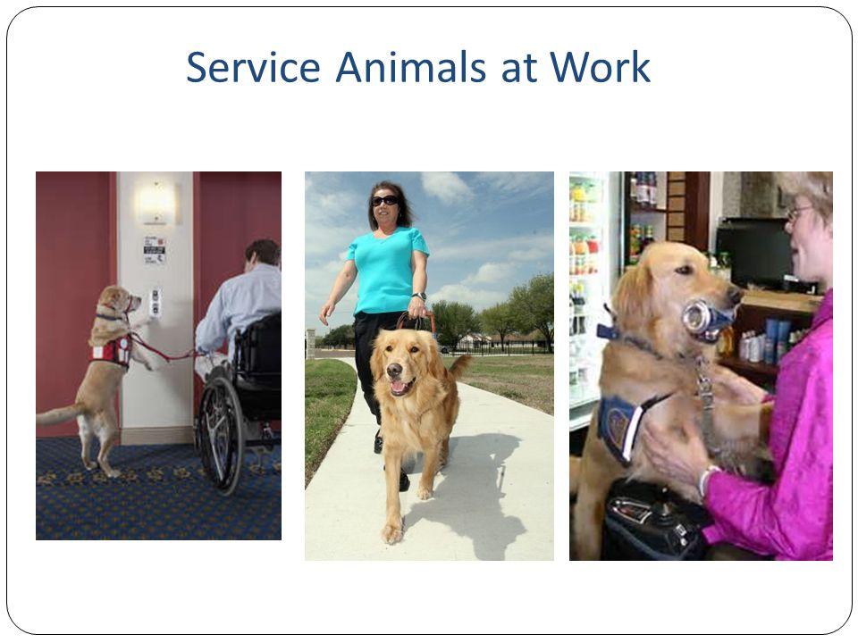 Service Animals at Work