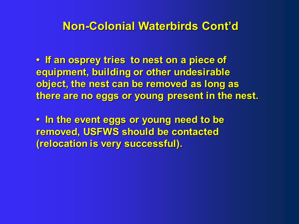 Examples of colonial waterbirds and their nests Common Tern Least Tern