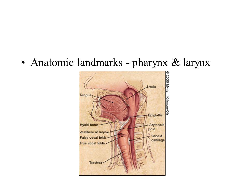 Anatomic landmarks - pharynx & larynx