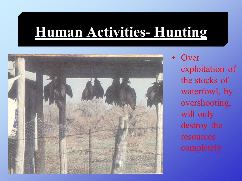 Human Activities- Fishing Fishing is compatible with the functioning of a wetland