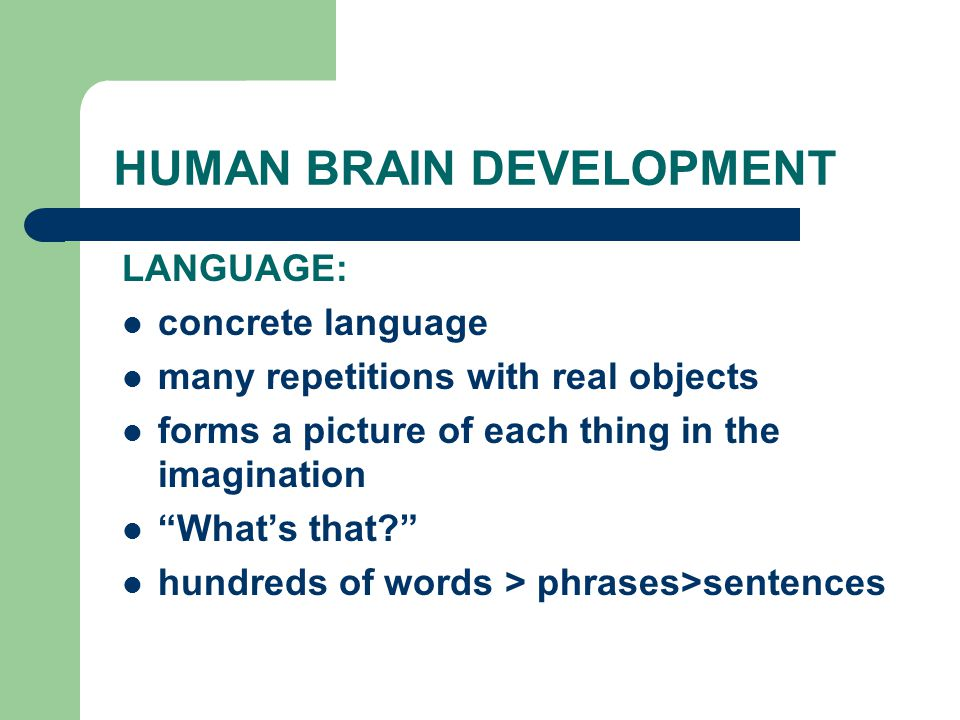 HUMAN BRAIN DEVELOPMENT LANGUAGE: concrete language many repetitions with real objects forms a picture of each thing in the imagination What's that hundreds of words > phrases>sentences