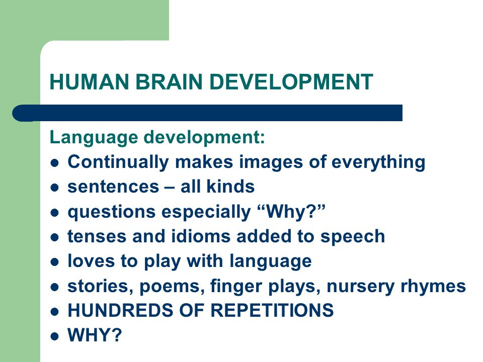HUMAN BRAIN DEVELOPMENT Language development: Continually makes images of everything sentences – all kinds questions especially Why tenses and idioms added to speech loves to play with language stories, poems, finger plays, nursery rhymes HUNDREDS OF REPETITIONS WHY