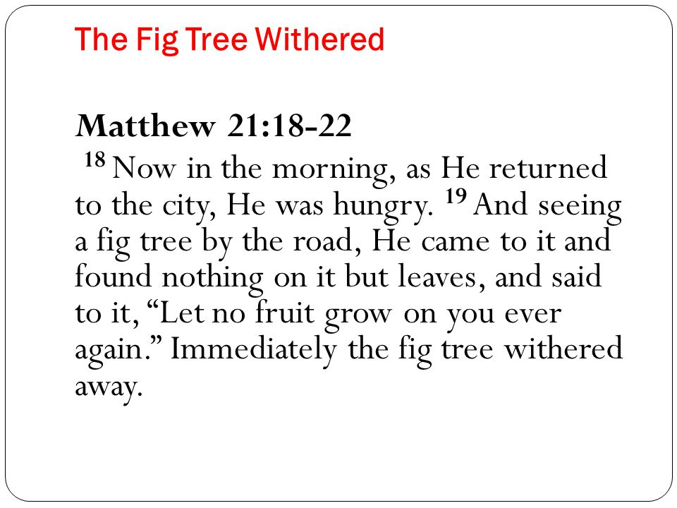 The Fig Tree Withered Matthew 21:18-22 18 Now in the morning, as He returned to the city, He was hungry.