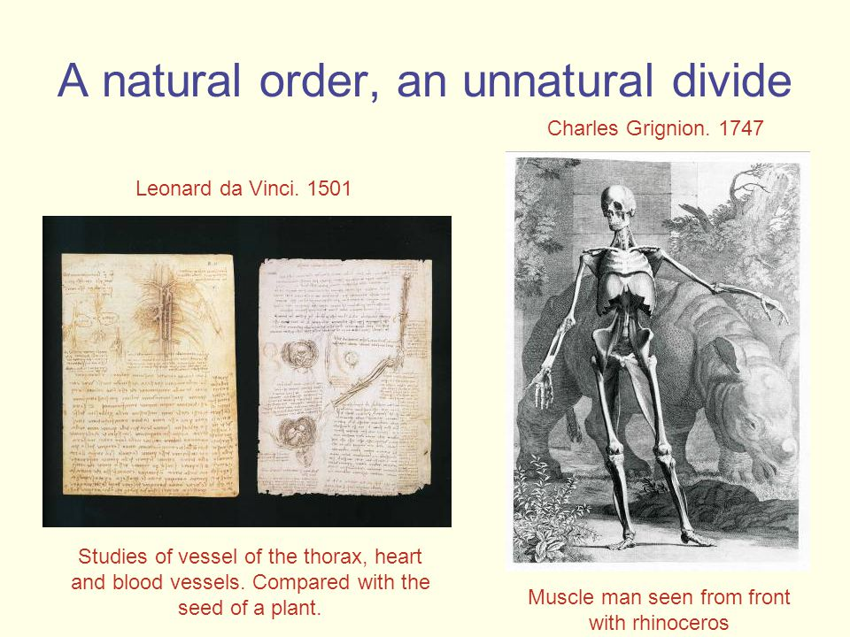 A natural order, an unnatural divide Studies of vessel of the thorax, heart and blood vessels.