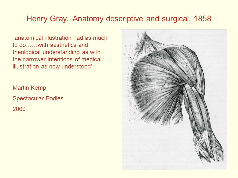 Henry Gray. Anatomy descriptive and surgical.