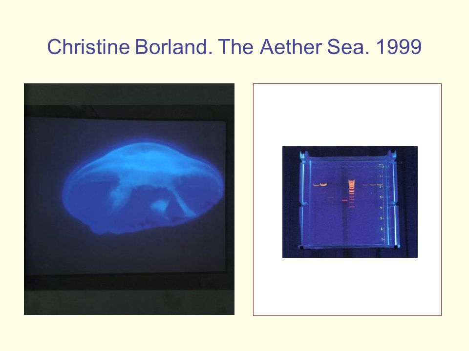 Christine Borland. The Aether Sea. 1999