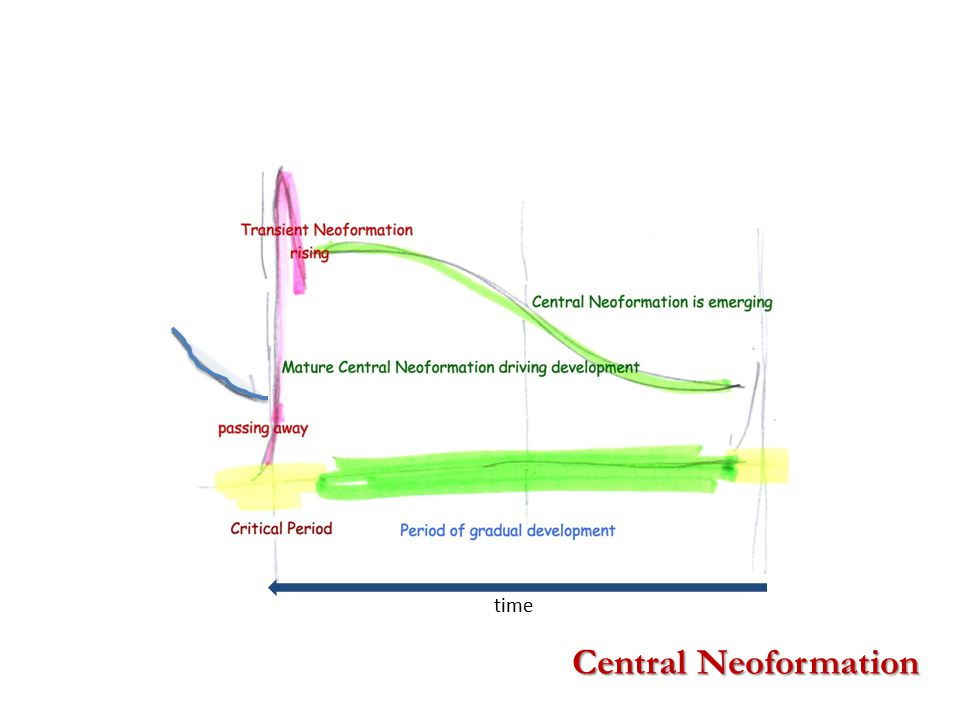 Central Neoformation time