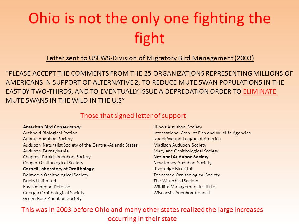Ohio is not the only one fighting the fight Letter sent to USFWS-Division of Migratory Bird Management (2003) PLEASE ACCEPT THE COMMENTS FROM THE 25 ORGANIZATIONS REPRESENTING MILLIONS OF AMERICANS IN SUPPORT OF ALTERNATIVE 2, TO REDUCE MUTE SWAN POPULATIONS IN THE EAST BY TWO-THIRDS, AND TO EVENTUALLY ISSUE A DEPREDATION ORDER TO ELIMINATE MUTE SWANS IN THE WILD IN THE U.S American Bird Conservancy Archbold Biological Station Atlanta Audubon Society Audubon Naturalist Society of the Central-Atlantic States Audubon Pennsylvania Chappee Rapids Audubon Society Cooper Ornithological Society Cornell Laboratory of Ornithology Delmarva Ornithological Society Ducks Unlimited Environmental Defense Georgia Ornithological Society Green-Rock Audubon Society Illinois Audubon Society International Assn.