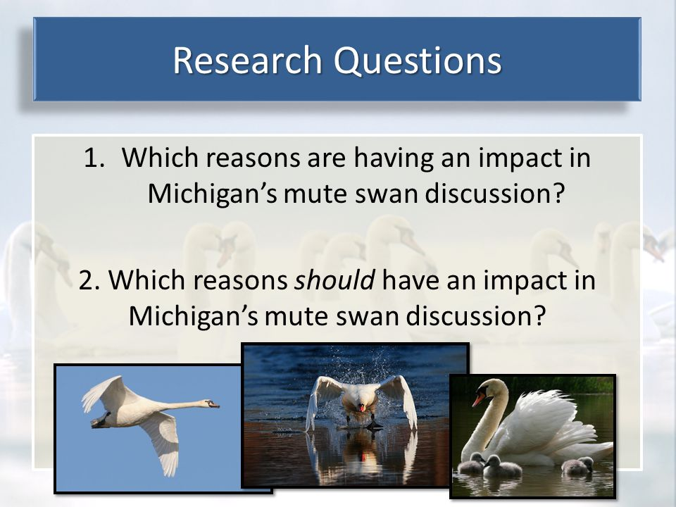 Environmental Ethics 1.Which reasons are having an impact in Michigan's mute swan discussion.