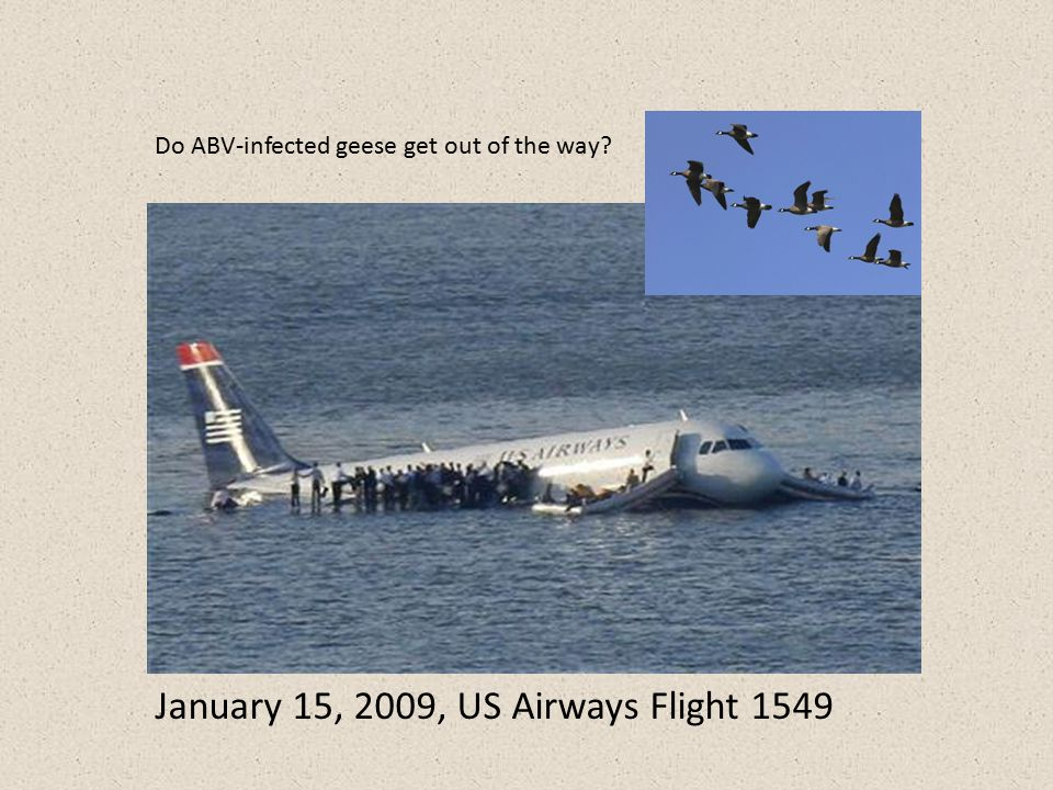 January 15, 2009, US Airways Flight 1549 Do ABV-infected geese get out of the way?