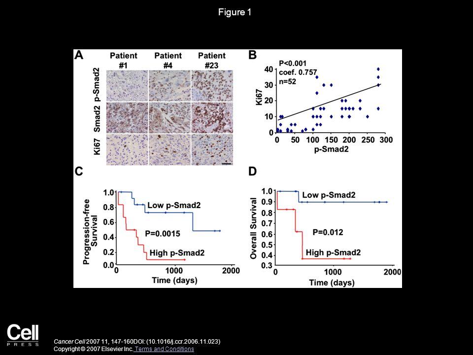 Figure 1 Cancer Cell 2007 11, 147-160DOI: (10.1016/j.ccr.2006.11.023) Copyright © 2007 Elsevier Inc.