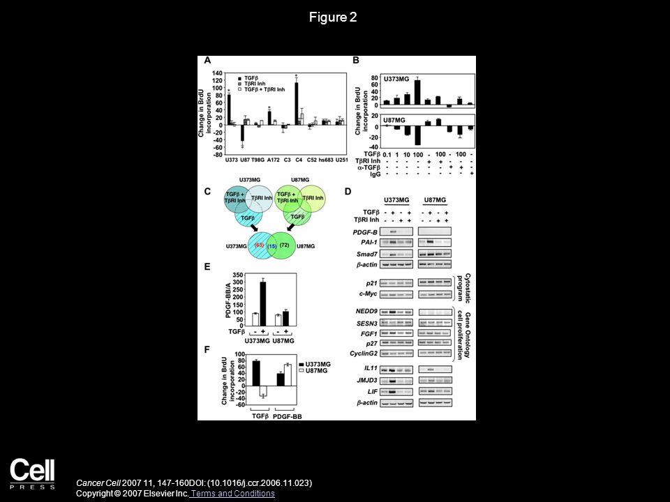 Figure 2 Cancer Cell 2007 11, 147-160DOI: (10.1016/j.ccr.2006.11.023) Copyright © 2007 Elsevier Inc.