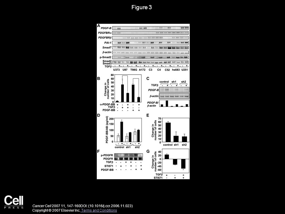 Figure 3 Cancer Cell 2007 11, 147-160DOI: (10.1016/j.ccr.2006.11.023) Copyright © 2007 Elsevier Inc.