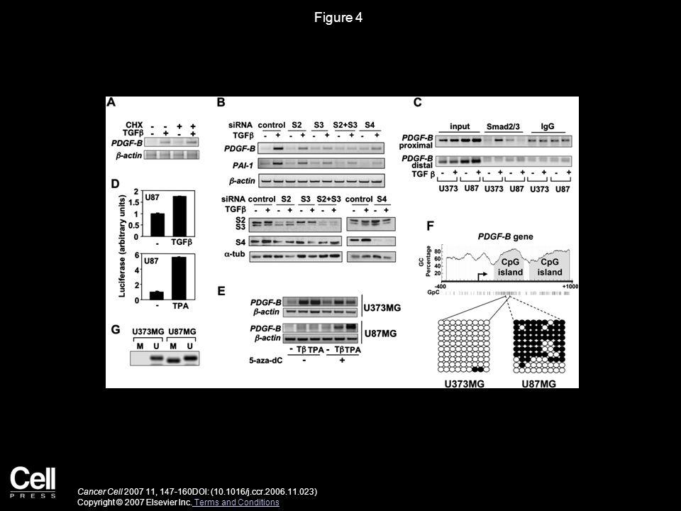 Figure 4 Cancer Cell 2007 11, 147-160DOI: (10.1016/j.ccr.2006.11.023) Copyright © 2007 Elsevier Inc.