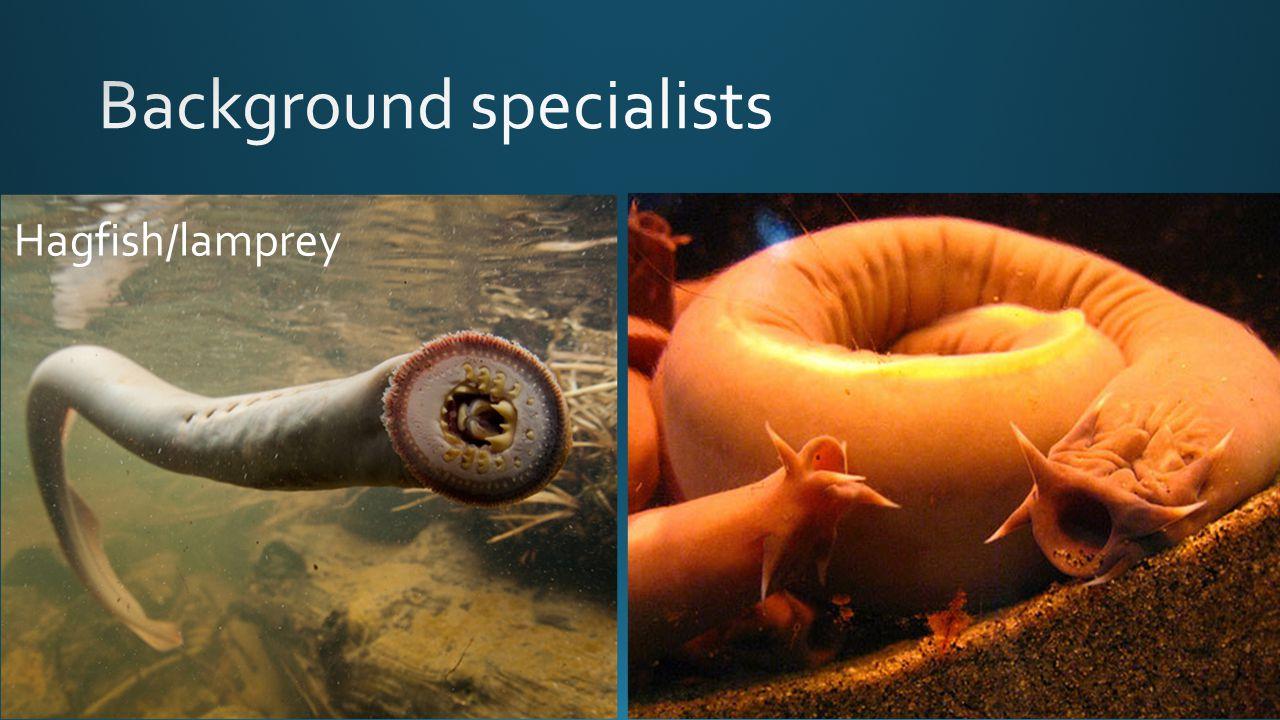 Hagfish/lamprey