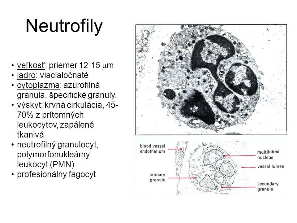 Neutrofily veľkosť: priemer 12-15  m jadro: viaclaločnaté cytoplazma: azurofilná granula, špecifické granuly, výskyt: krvná cirkulácia, 45- 70% z prí